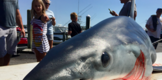 Shark fishing tournaments
